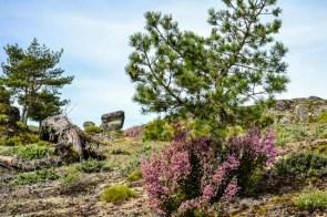 Blühende Landschaften. Foto: Flora Jädicke
