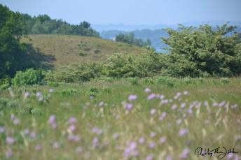 Stille sanftmütige Landschaft auf Mönchgut. Foto: Flora Jädicke