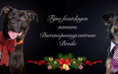 Zira en Floris kerstwens