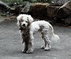 Honden verjagen