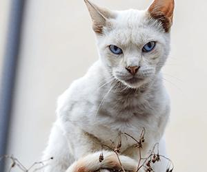 Katten verjagen met huishoudelijke middelen.