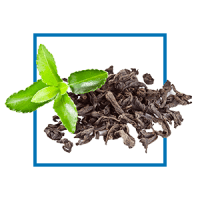 night-green-tea-extract