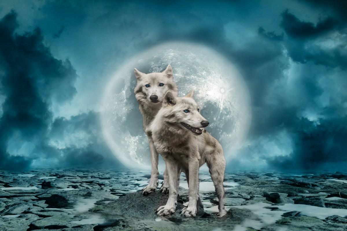 Welke wolf geef jij te eten...?