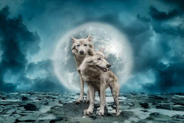 welke wolf geef jij te eten