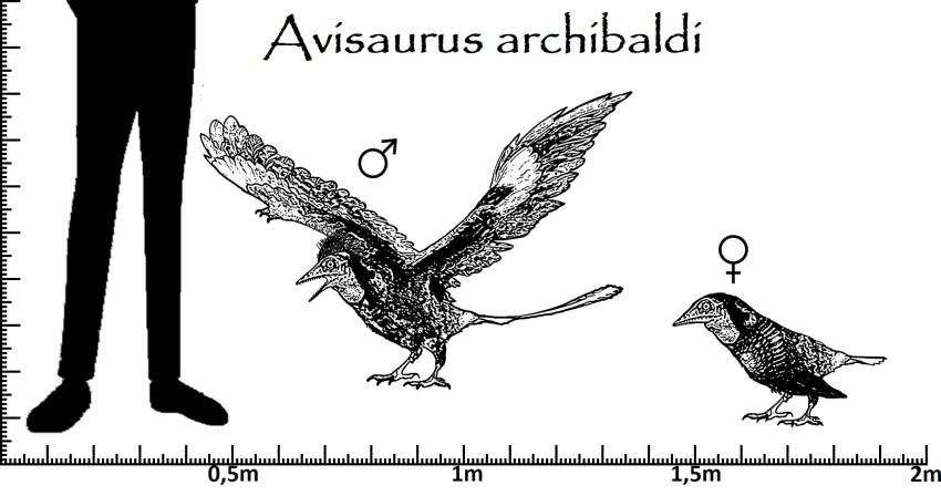 Avisaurus Größenvergleich