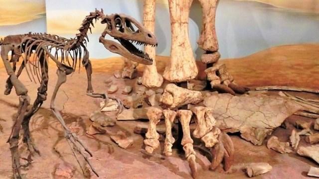 Braunschweig Dino-Saal 2