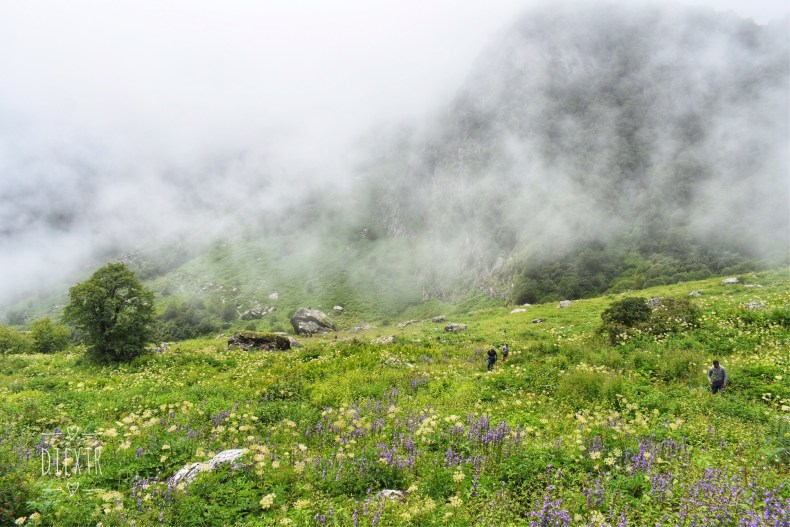 Mystical weather in Valley of flowers
