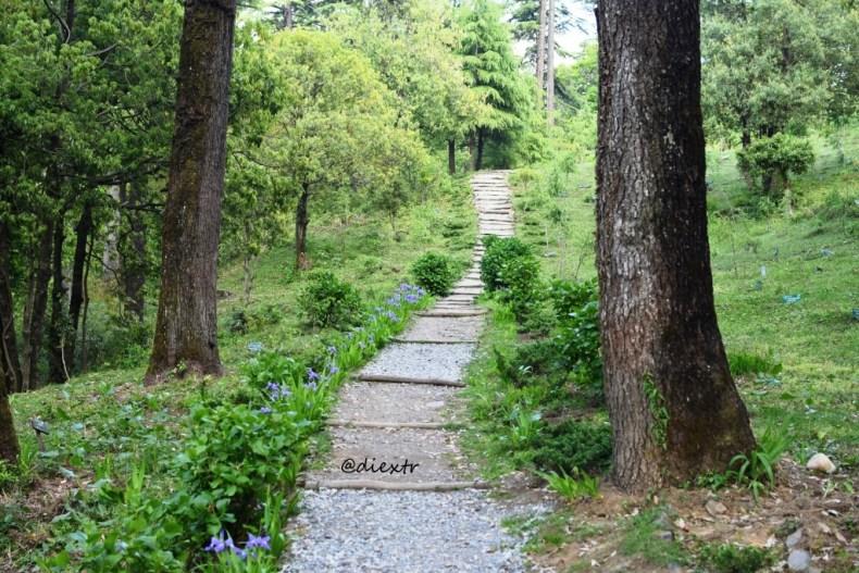 EcoForest.JPG
