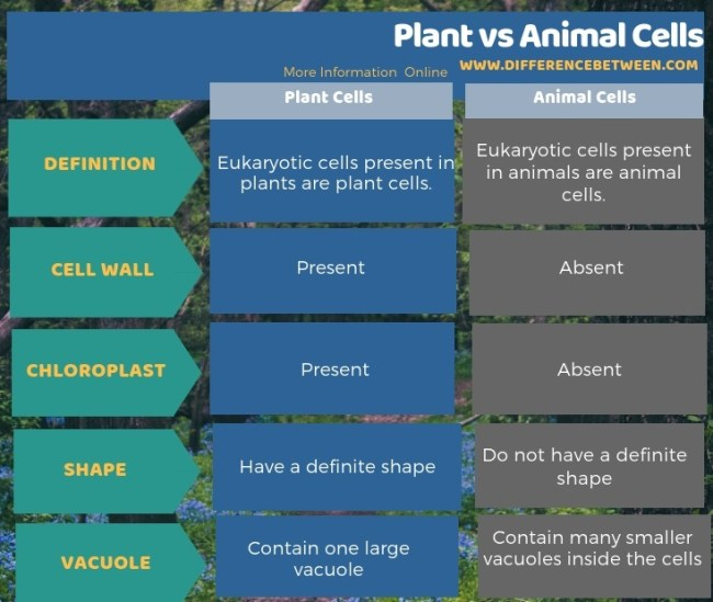 Difference Between Plant and Animal Cells in Tabular Form