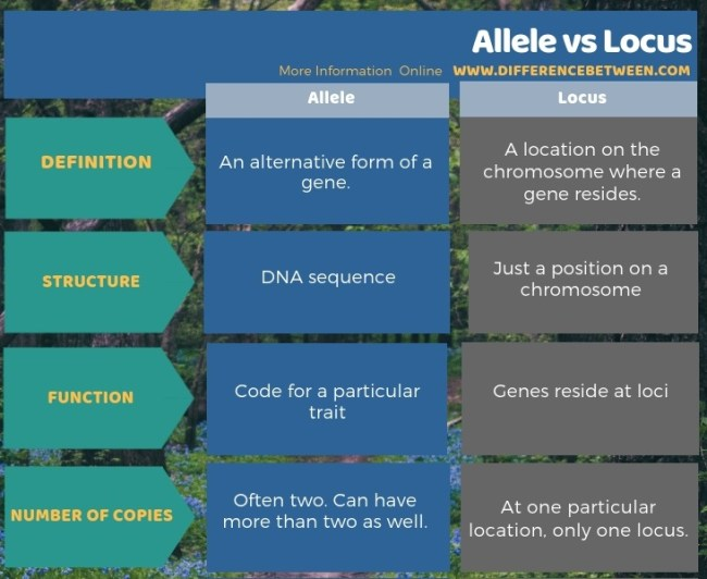 Difference Between Allele and Locus in Tabular Form