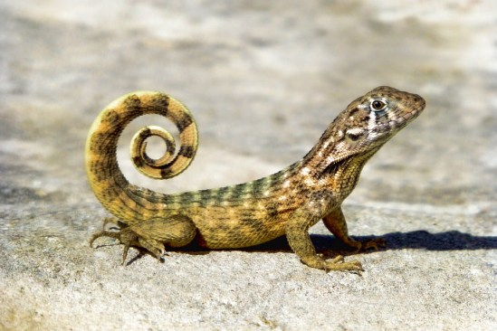 Key Difference Between Mammal and Reptile