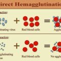 Difference Between Precipitation and Agglutination Reactions