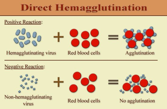 Difference Between Precipitation and Agglutination Reactions_Fig 02