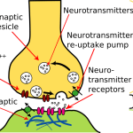 Difference Between Neurotransmitters and Hormones