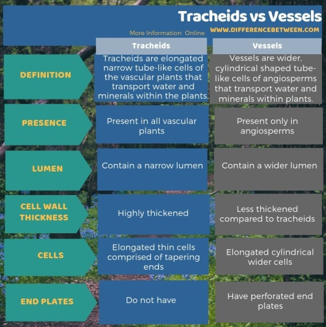 Difference Between Tracheids and Vessels in Tabular Form