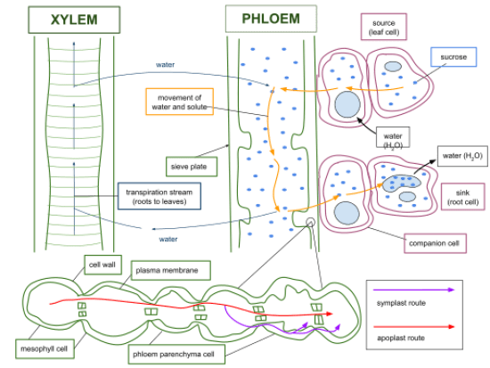 Key Difference Between Transportation and Translocation