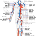 Difference Between Circulatory System and Lymphatic System