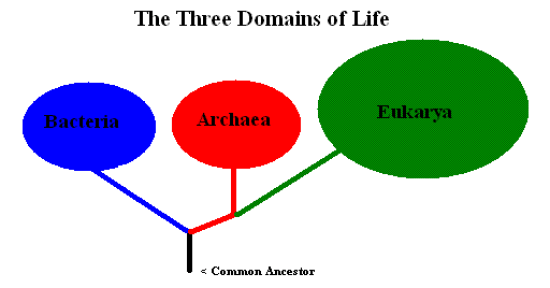 Key Difference Between Kingdom and Domain
