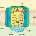Difference Between Photosystem 1 and Photosystem 2