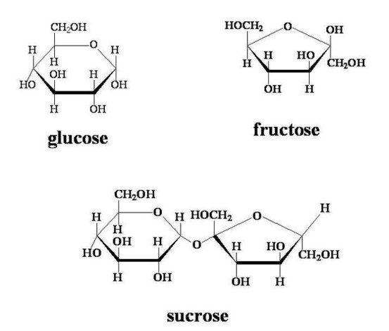 Difference Between Sucrose and Glucose