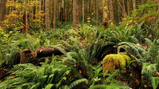 Biodiversity vs Species Richness