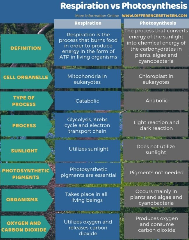 Difference Between Respiration and Photosynthesis in Tabular Form