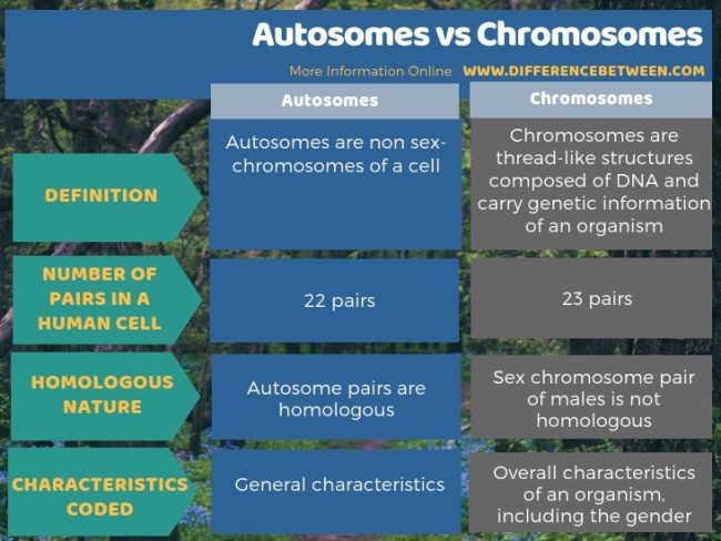 Difference Between Autosomes and Chromosomes - Tabular Form