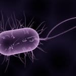 Difference Between Bacteria and Archaea