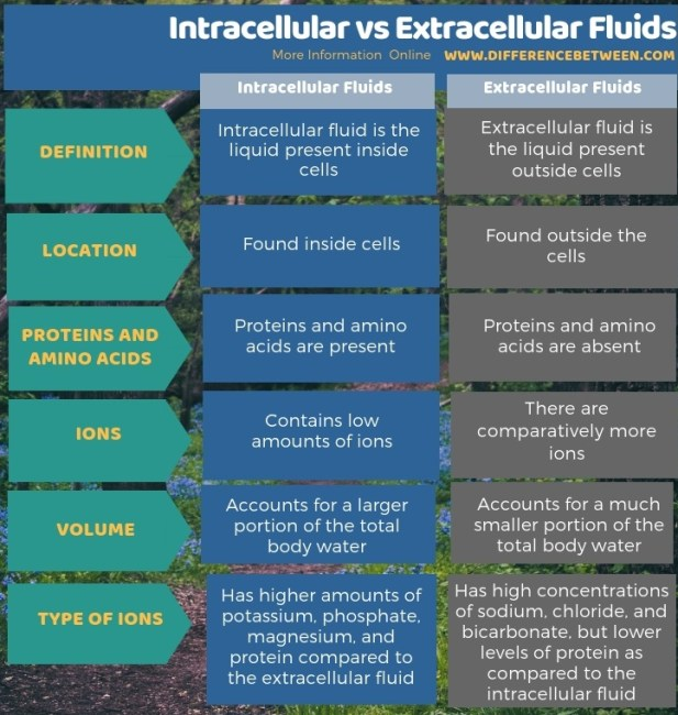 Difference Between Intracellular and Extracellular Fluids -Tabular Form