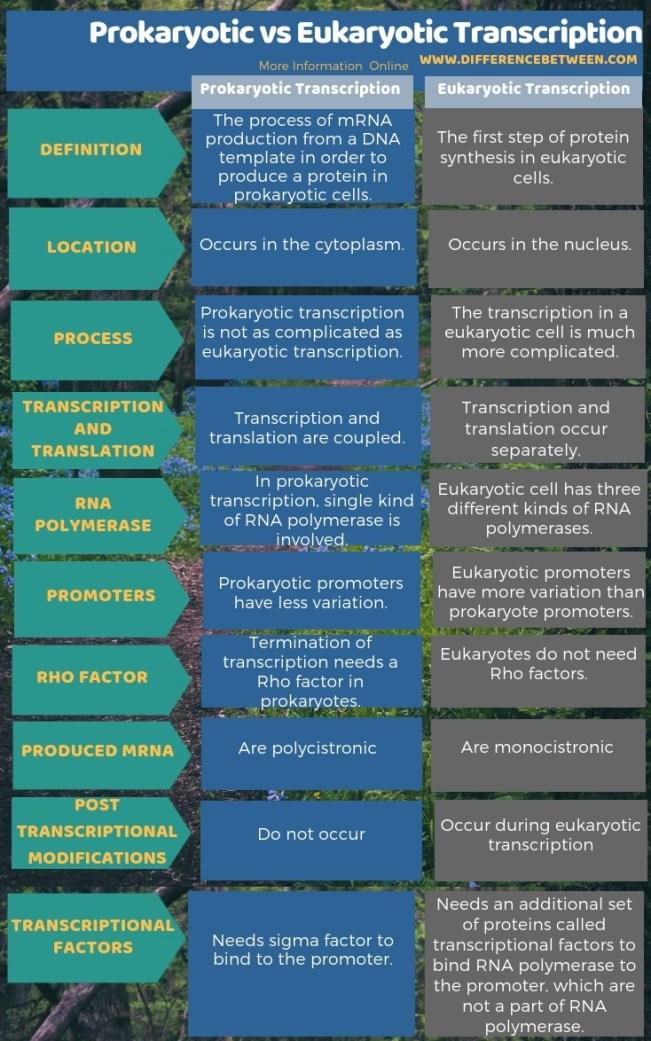 Difference Between Prokaryotic and Eukaryotic Transcription in Tabular Form