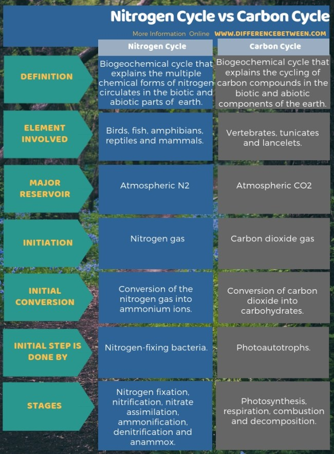 Difference Between Nitrogen Cycle and Carbon Cycle in Tabular Form