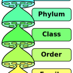Difference Between Taxonomy and Systematics