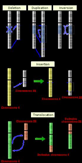 Key Difference Between Gene Mutation and Chromosome Mutation
