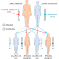 Difference Between Sex-linked and Autosomal