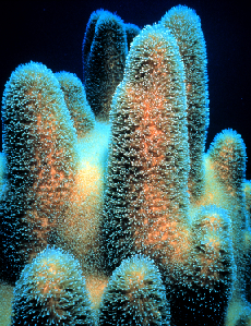 Difference Between Coral