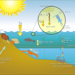 Difference Between Nekton and Plankton and Benthos