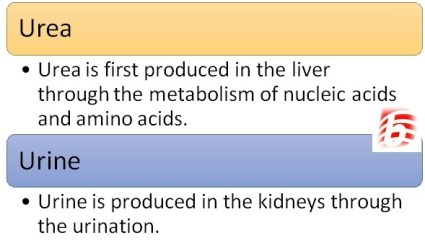 Difference Between Urea and Urine