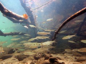 Difference Between Freshwater and Marine Water Animals