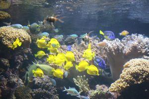 Marine Water Animals