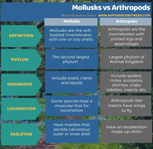 Difference Between Mollusks and Arthropods in Tabular Form