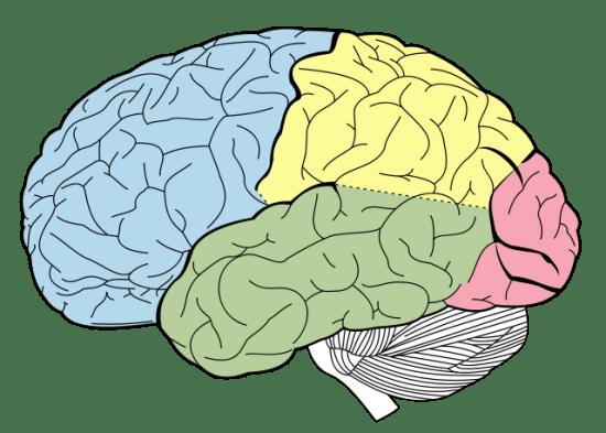 Maturation vs Learning