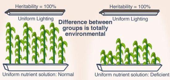 Genetic Variation vs Environmental Variation