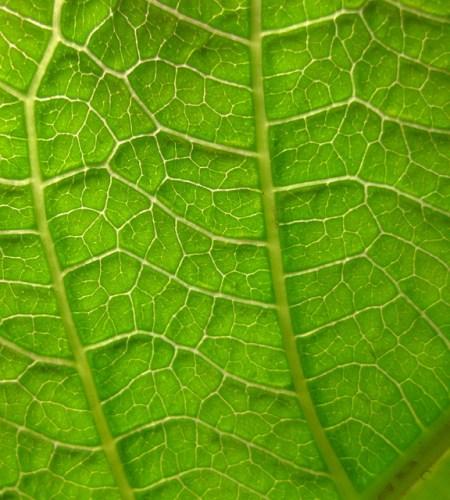 Dermal vs Ground Tissue   Difference Between