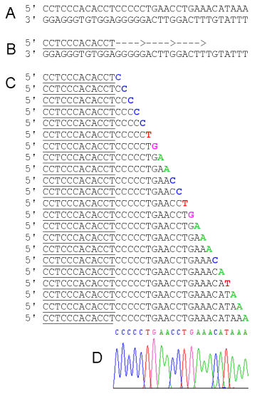 Difference Between Sanger Sequencing and Pyrosequencing