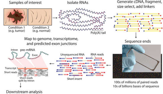 Difference Between Microarray and RNA Sequencing
