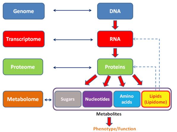 Difference Between Metabolomics and Metabonomics