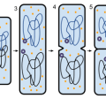 Difference Between Vertical and Horizontal Gene Transfer