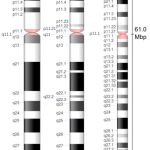 Difference Between X and Y Chromosomes