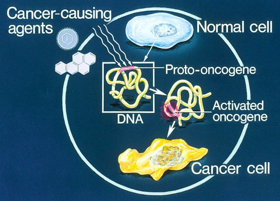 Difference Between Oncogenes and Proto Oncogenes
