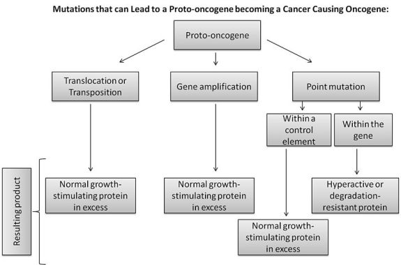 Key Difference -Oncogenes vs Proto Oncogenes